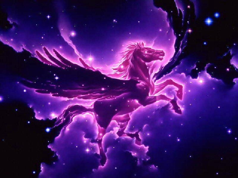 unicorn-800x600-049.jpg