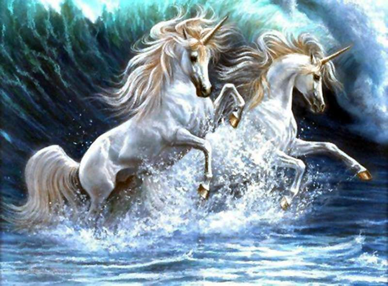 unicorn-800x600-053.jpg