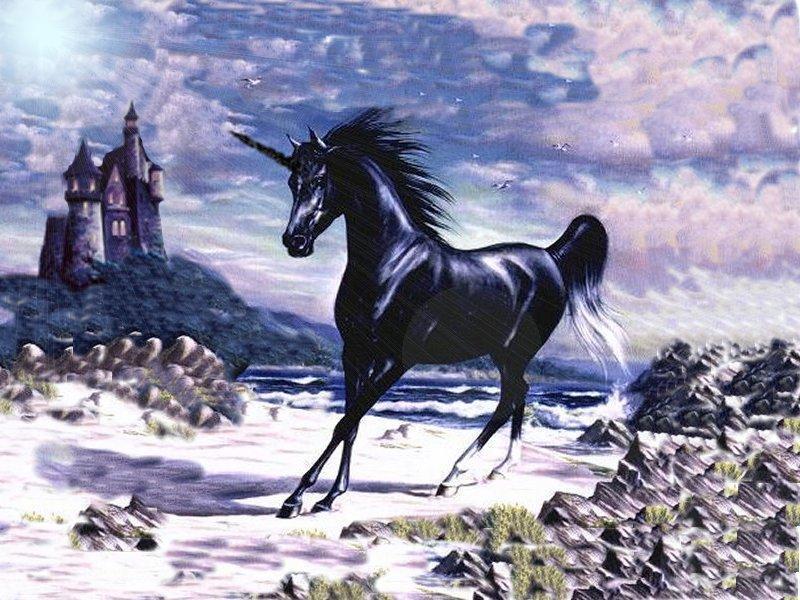 unicorn-800x600-122.jpg